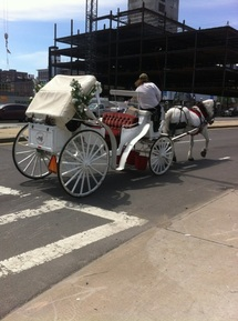 Seeing a Boston Horse Buggy with Mr. C Car Service Inc